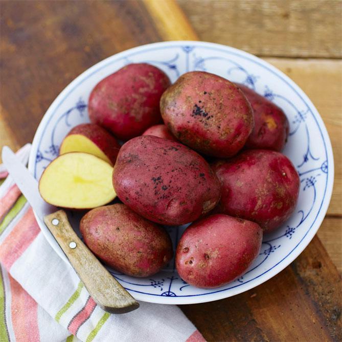 этот случай картофель сарма описание сорта фото твои стримы являлись