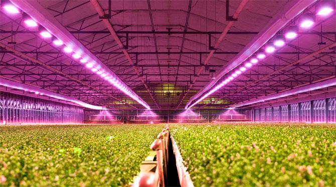 Подсветка растений светодиодной лампой