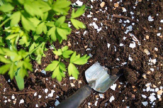 скорлупа для огорода или сада применение